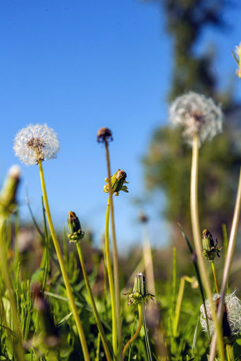 Plant Flower Flowering Plant Growth Beauty In Nature Fragility Vulnerability  Freshness Nature Close-up Sky Field Land Focus On Foreground No People Day Plant Stem Selective Focus Flower Head Inflorescence Outdoors Softness