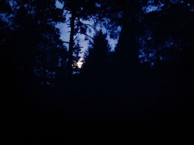 Werewolf Nature Moon Moonlight Werewolf Howling At The Moon Trees Forest Photography Forest