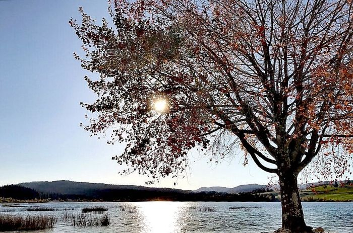 Lake View Tree Autumn Colors Huaweip10plus Tranquility Nature Collection Water Nature Tranquil Scene