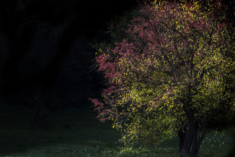 Atumn Colors Beauty In Nature Growth Nature Night No People Outdoors Tree