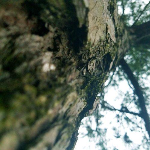 Tree Tree Bark