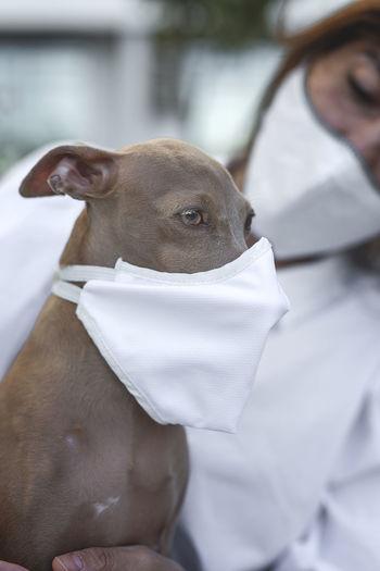 Close-up of man and dog wearing masks