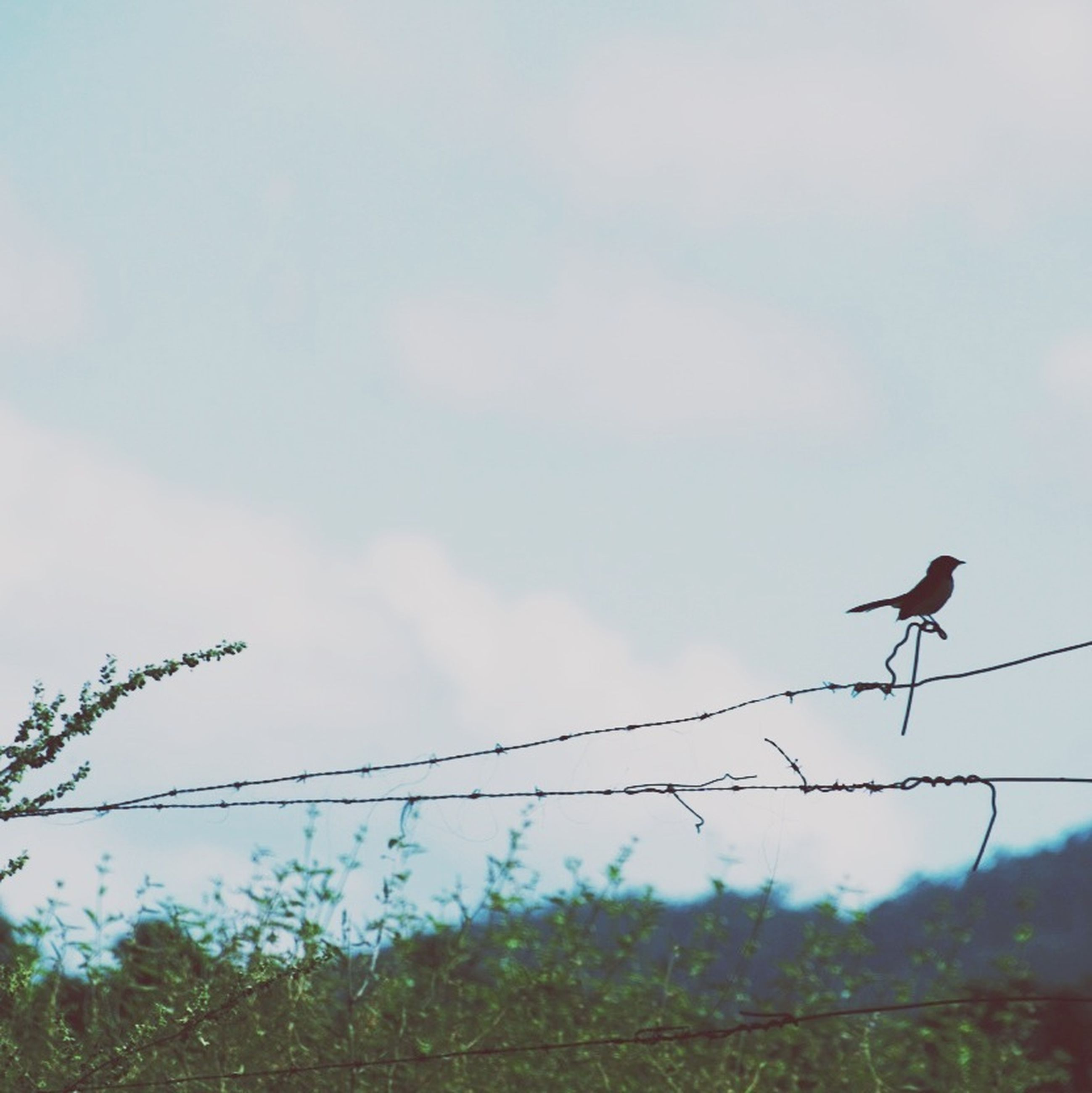 animal themes, bird, animals in the wild, wildlife, perching, sky, flying, one animal, low angle view, nature, two animals, field, flock of birds, spread wings, outdoors, day, no people, cloud - sky, three animals