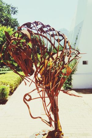 Ion Horse Western Cape Horses Art Somerset West