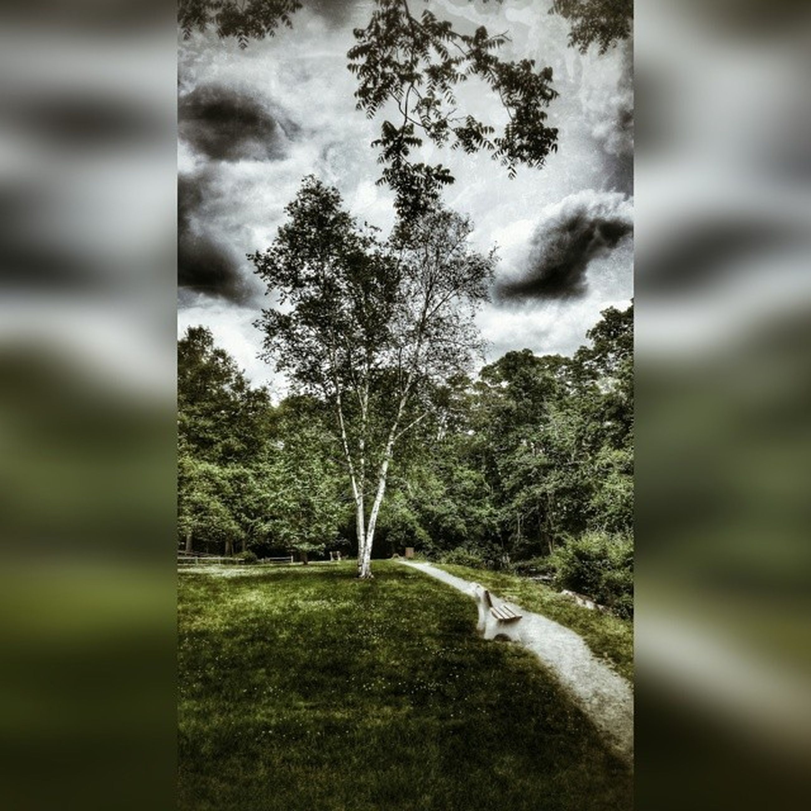 tree, sky, cloud - sky, tranquility, nature, tree trunk, grass, tranquil scene, growth, landscape, day, field, cloudy, cloud, beauty in nature, green color, scenics, outdoors, focus on foreground, park - man made space