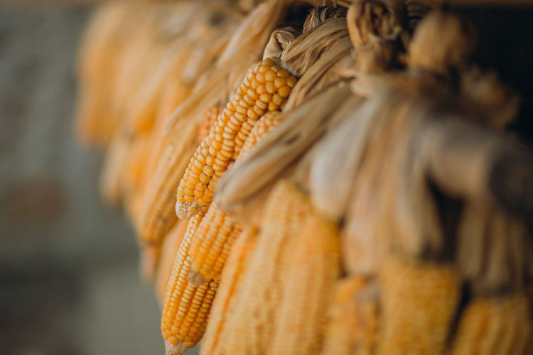 Close-up Corn Corn On The Cob Food Food And Drink Hanging Healthy Eating Sweetcorn Yellow