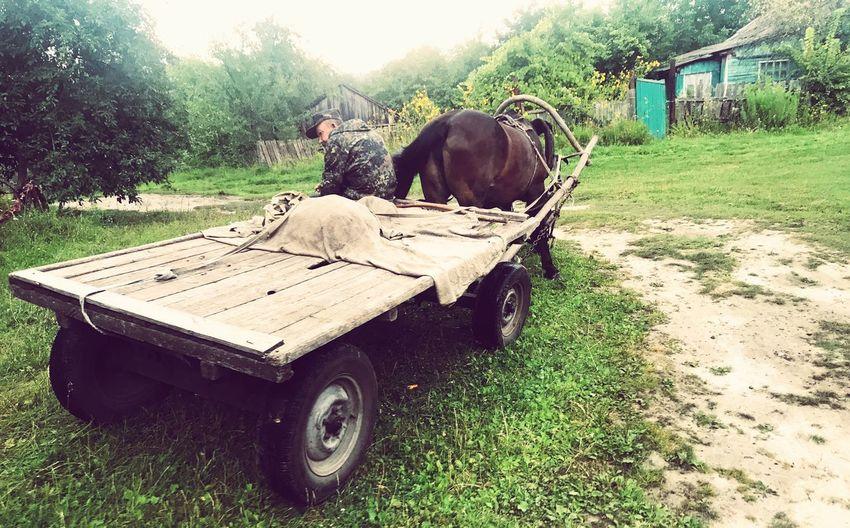Ukrainian Amish EyeEmNewHere Sedniv Ukraine Horse Cart Horse Plant Land Field Mammal Domestic Animals Nature Day
