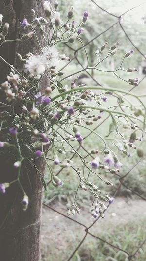 Purple Flower Nature Beauty In Nature Freshness Growth Fragility Springtime Outdoors Plant Blossom Flower Head Day No People Lavender Close-up Vintage Photo Freshness Beauty In Nature Nature Growth