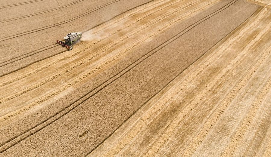 Harvesting Zatva Drone Photography Drone Shot Harvest Stripes Pattern Lines Harvest Time Crop  Food Wheat Field EyeEm Nature Lover EyeEm Gallery DJI X Eyeem Nature Wheat Grass Seed Gluten Nutritient EyeEm Selects Agriculture Aerial View High Angle View Field Agricultural Equipment Combine Harvester Agricultural Machinery Farmland Cultivated Land