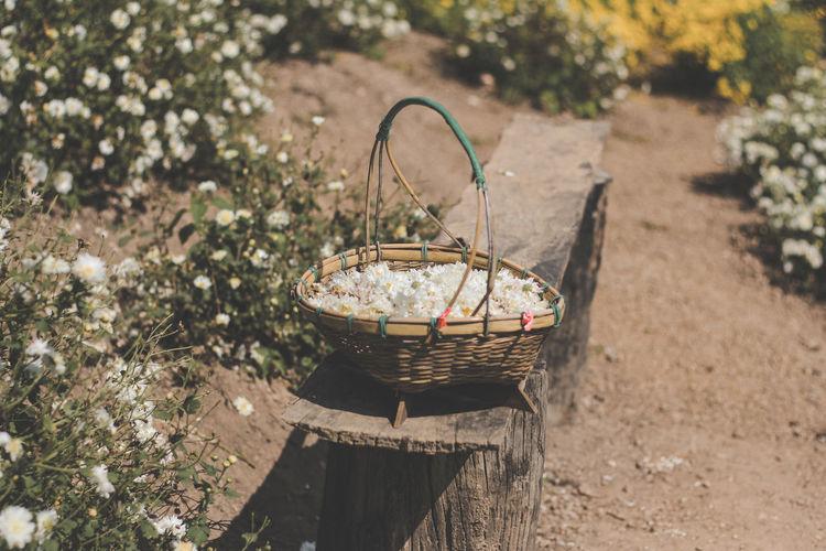 Plants in wicker basket