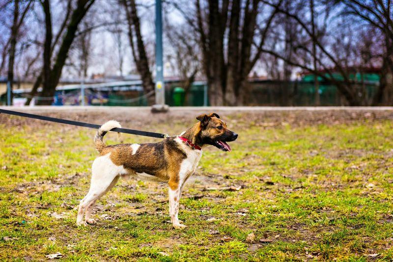 Dog Paluch Schronisko Animal Walking The Dog DogLove Dog Star