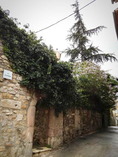 Rue Jardin Arbre Sky Tree Jardins Plant Nature Tree Architecture Histoire Mur