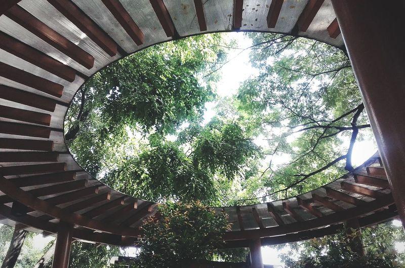 Circle of life. 🌳🌳🌳 EyeEm Enjoying Life Nature Tree And Sky