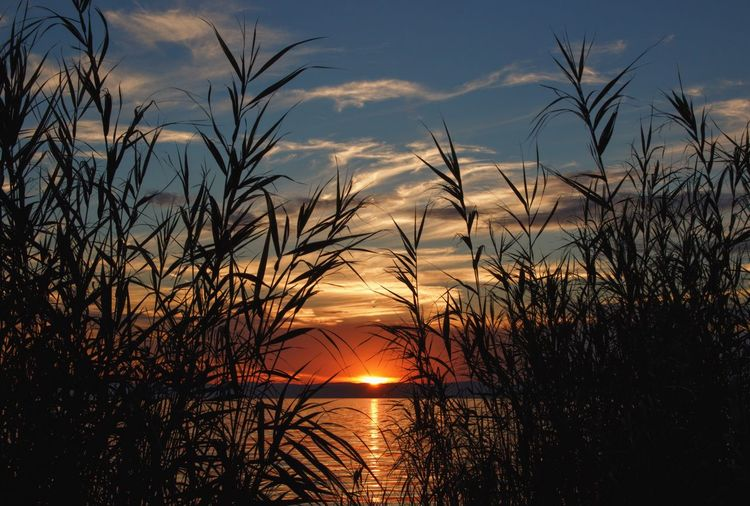Hungary Balaton Beauty In Nature Growth Idyllic Nature Nature_collection Naturelovers Naturephotography No People Orange Color Outdoors Scenics Silhouette Sky Sun Sunlight Sunset Tranquil Scene Tranquility