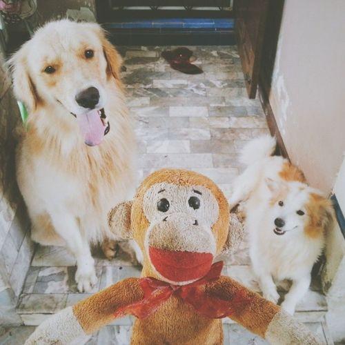 Hello world, hello sunny day!!! ??? Dog Goldenretriever Pet13