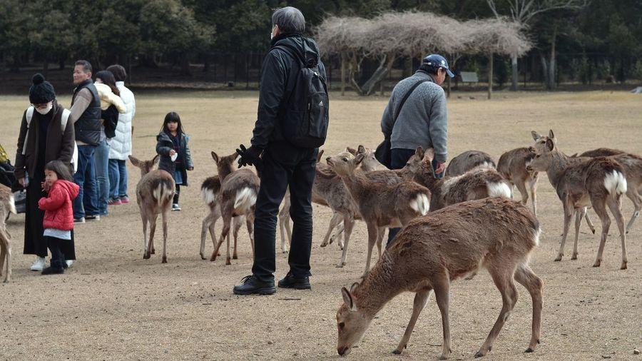 旅の動物ついでに3月に行った奈良の鹿 Deer Animal Watching People Watching Nara Travel Photography Animal Themes Animal Photography Nara,Japan March 2017