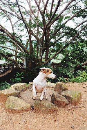 #Thailand #chiangmai #thegiant Mammal Animal Themes Animal Domestic Animals Domestic Pets One Animal Tree