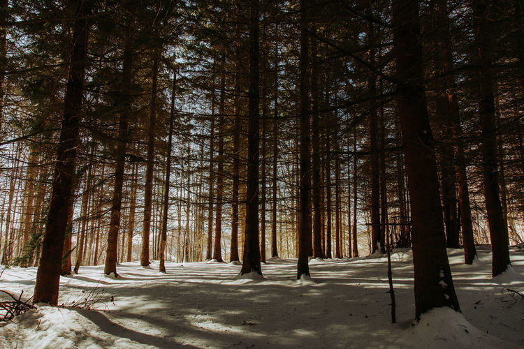 Forest in winter Serbia Beauty In Nature Canon Cold Temperature Day Forest Landscape Nature No People Outdoors Pine Tree Scenics Shadow Snow Srbija Tranquil Scene Tranquility Tree Tree Trunk Winter WoodLand