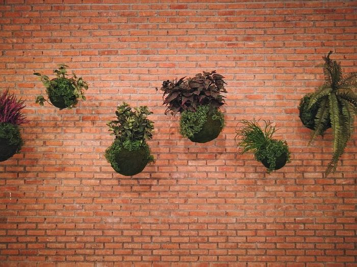 Brick Block Wall Brick Block Wall Textures Wall Plant On The Wall Nature Plant Hanging