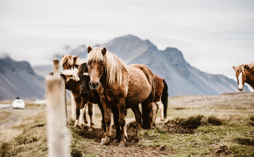 Horses Standing On Field