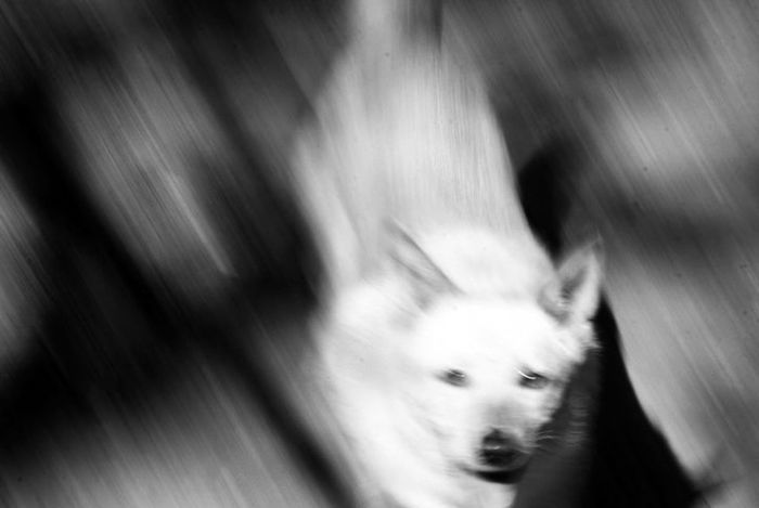 Perica Bnw Bnw_collection Bnw_captures Bnwphotography Bnwmood Fotoblancoynegro Argentina Villa Gesell Inchfoto Perro Pets Dog Close-up Animal Nose Animal Eye