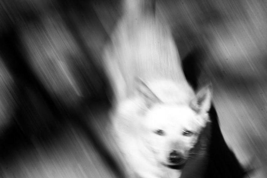 Perica Bnw Bnw_collection Bnw_captures Bnwphotography Bnwmood Fotoblancoynegro Argentina Villa Gesell Inchfoto Perro Pets Dog Close-up Animal Nose Animal Eye