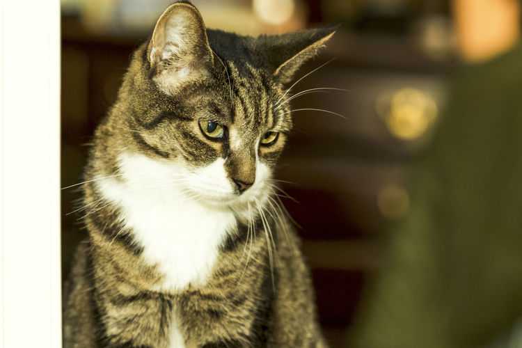 Animal Themes Cats Close-up Domestic Animals Domestic Cat Feline One Animal Pets Tadda Community