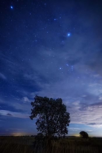 The tree with the stars