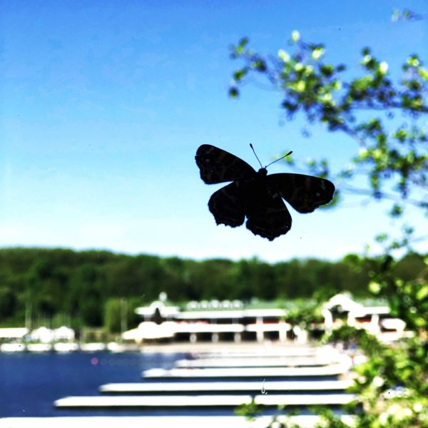 #butterfly #poland #poznan #summer Poland Summertime Butterfly One Animal Animal Themes Insect Animal Animal Wildlife Sky Animals In The Wild Nature Animal Wing Outdoors Blue First Eyeem Photo
