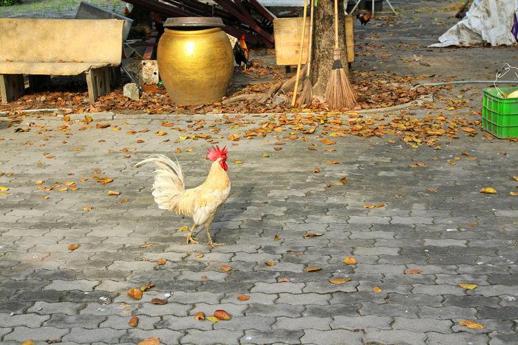Birds on cobblestone street