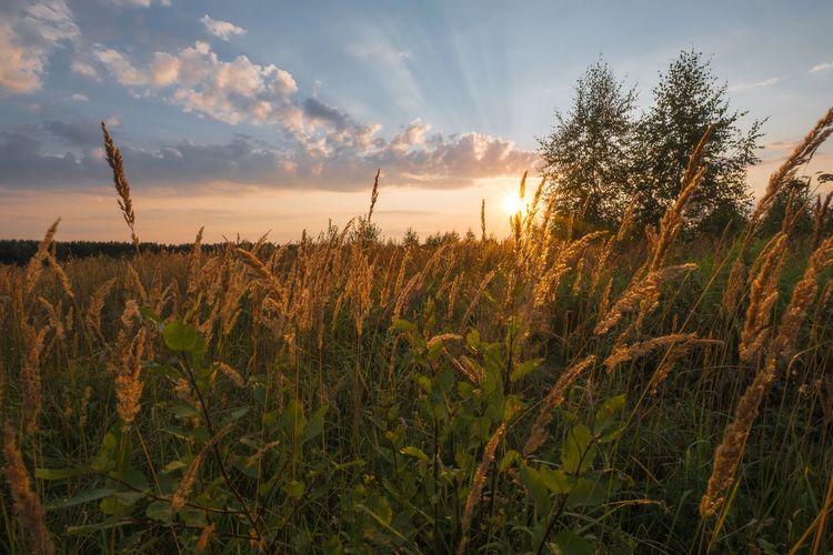 Field, Russian field... Nature River Flower Landscape Tree Travel Forest Grass Beauty In Nature Moscow Region Fujifilm_xseries Fujifilmru Fujifilm X-t20 Xf10-24mm Xf1024 Xt20