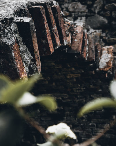 Selective Focus No People Close-up Day Nature Wood - Material Focus On Background Wall Textured  Outdoors Dirt Brick Weathered Old Solid Pattern Backgrounds Growth Architecture Metal Sibiu Romania Wall Castle Stone Detail Concept EyeEm Best Shots EyeEmNewHere EyeEm Selects EyeEm Nature Lover EyeEm Gallery Nikon D7500