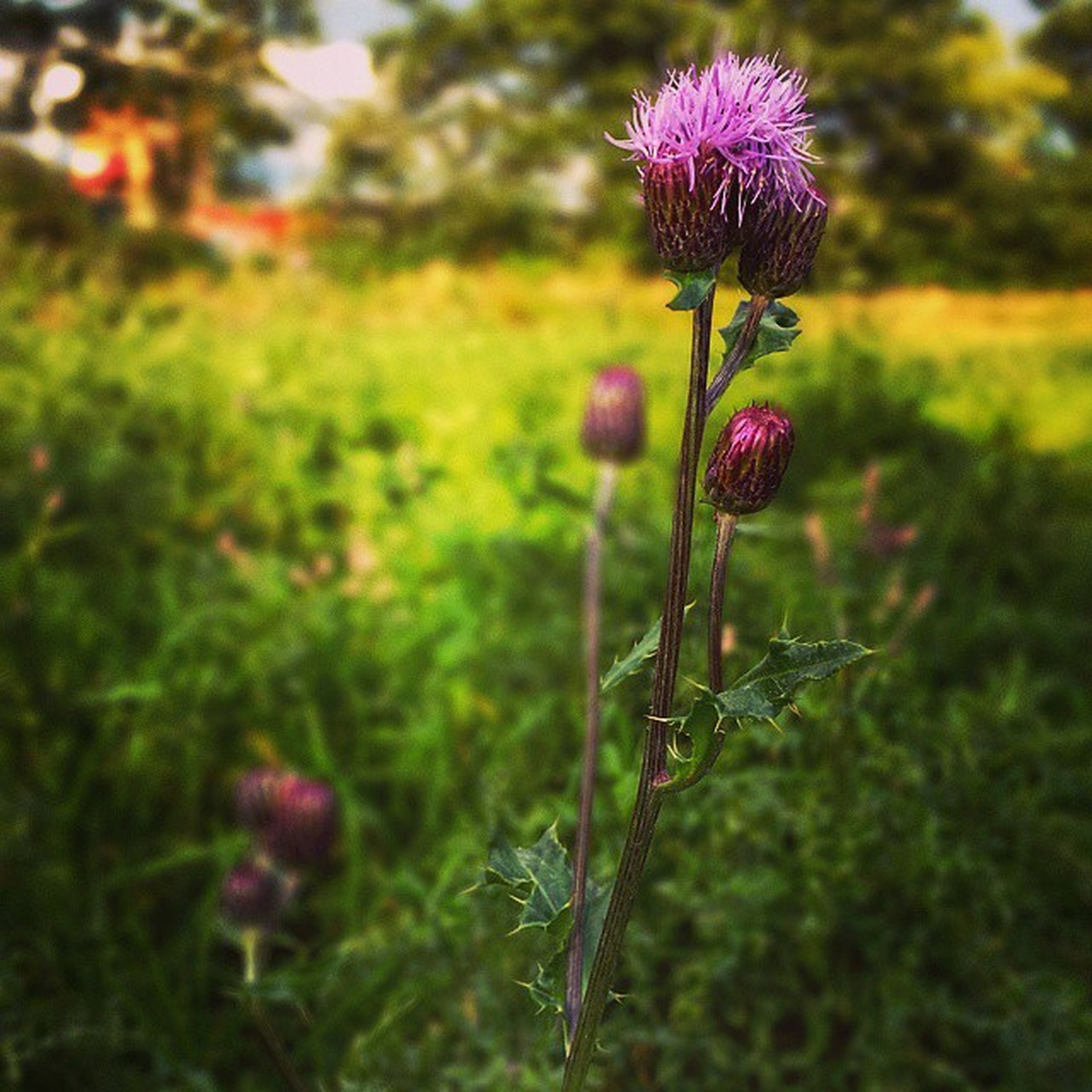 flower, freshness, growth, fragility, beauty in nature, focus on foreground, plant, stem, nature, close-up, field, petal, blooming, pink color, flower head, bud, in bloom, selective focus, wildflower, day