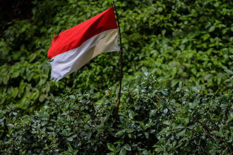 Flag of Indonesia Plant Growth Flag Green Color Nature Day Patriotism No People Red Leaf Plant Part Emotion Outdoors Tree Wind Beauty In Nature Pride Environment Focus On Foreground INDONESIA Indonesian Indonesia Flag