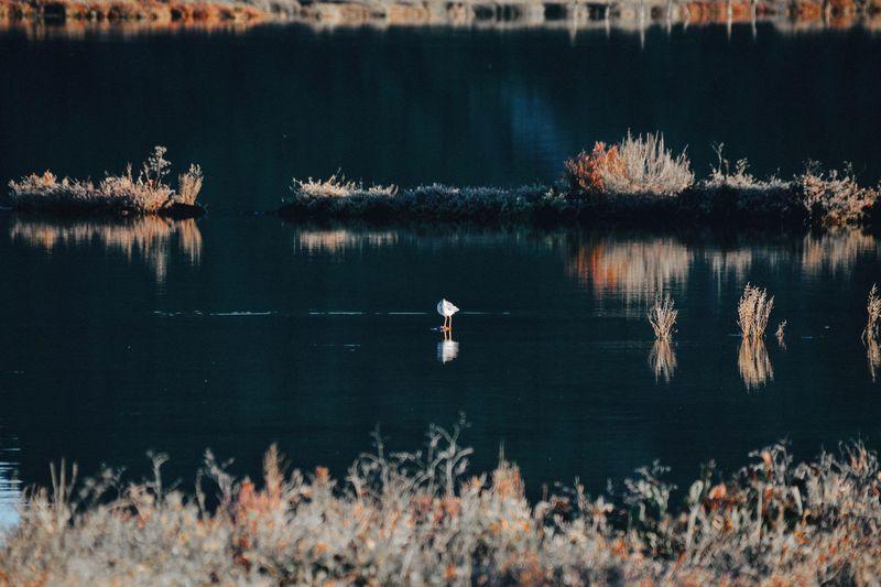 Bird swimming on lake