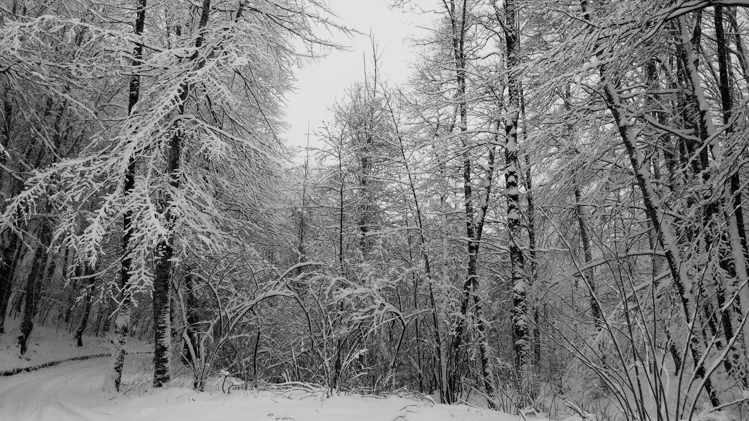snow, winter, cold temperature, tree, season, weather, tranquility, tranquil scene, nature, bare tree, covering, beauty in nature, frozen, forest, scenics, branch, landscape, tree trunk, woodland, non-urban scene