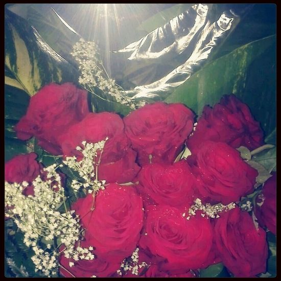 Thanks for these outstanding roses familia, I love it. Visiting Family Too Much Love Family Love♥