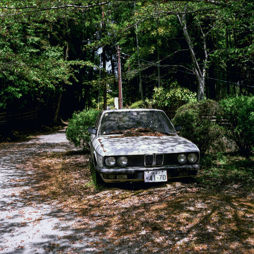 Transportation Growth Tree Car Wreck Bmw Mode Of Transport No People Outdoors Day Nature Japan Film Photography Medium Format 6x6