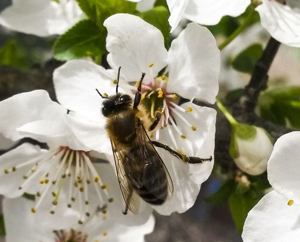 Insect Nature Plant Animal Themes Animals In The Wild Beauty In Nature Flower No People Close-up Animal Wildlife One Animal Day Bee Growth Freshness Pollination Outdoors Fragility Flower Head Mothernature Springtime Natureporn