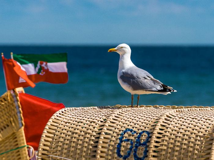Birds perching on beach