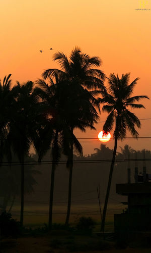 Mesmerising Mornings Sun Sunrise Nature Golden Hours Andhra Pradesh India Godavari Districts Golden Hour Godavari District Farms Travel Roadtrip Mornings Early Mornings Tree Palm Tree Sunset Silhouette Sky Coconut Palm Tree Palm Leaf Coconut Tree Trunk