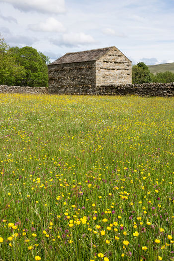 Wild flower meadow and field barn at Muker in Swaledale, North Yorkshire, UK Plant Architecture Built Structure Field Land Growth Nature Building Exterior Landscape Sky Flower Green Color Flowering Plant Rural Scene Beauty In Nature Building No People Cloud - Sky Day Grass Outdoors Meadows Dry Stone Wall Copy Space Wild Flowers Swaledale Yorkshire Dales National Park Summer Muker Barn