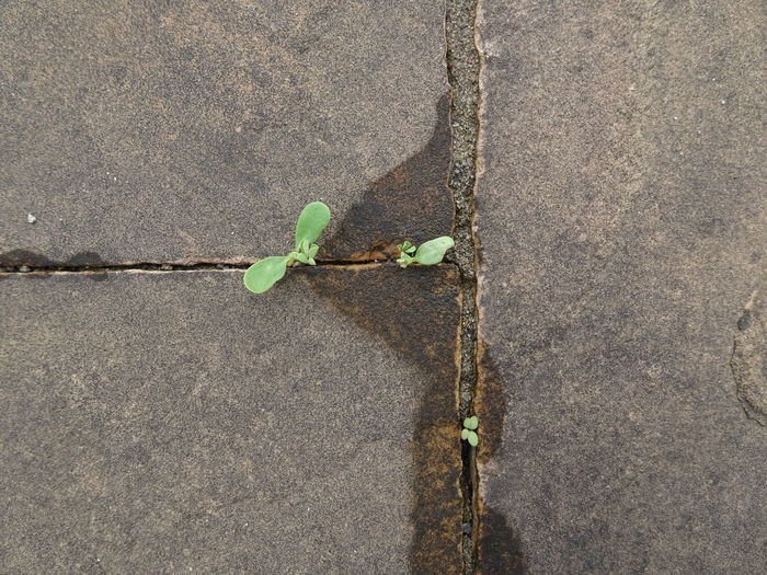 Seeds Of Life Nature Power Resilience  Nature Resilience Nature Resistence Plant Plant Life Day Floor Plant Part Growth Outdoors Footpath Concrete