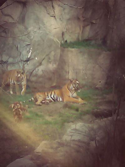 Zoo <3