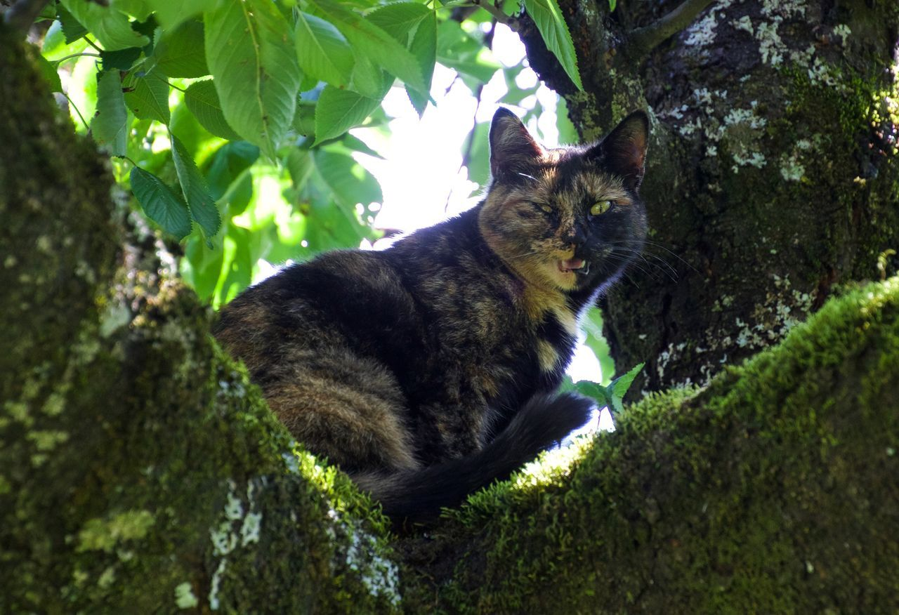 domestic cat, one animal, mammal, tree, animal themes, feline, outdoors, no people, day, domestic animals, sitting, pets, nature, leaf, growth, branch