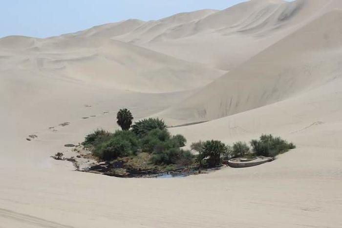 Oasis. Landscape Relaxing Dunes Dune