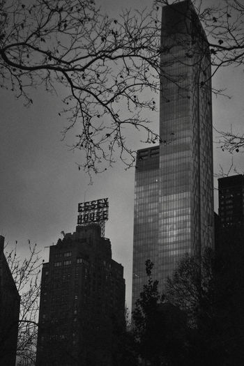 Central Park, 2018 Building Exterior Built Structure Architecture Tree Building Plant Sky City Nature Tower Low Angle View Office Building Exterior No People Bare Tree Branch Tall - High Modern Skyscraper Outdoors Travel Destinations Financial District  Spire  Buildings Black And White Central Park 17.62°