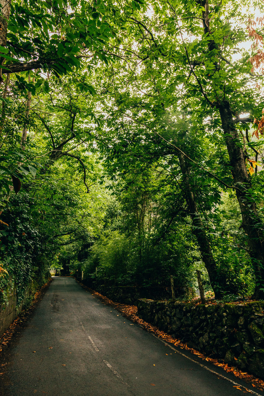 ROAD BY TREES IN FOREST
