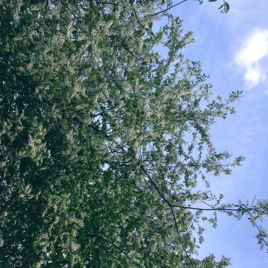 Spring Trees Flowers
