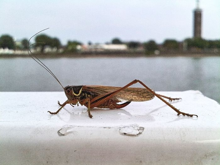 Close-up of insect on the river